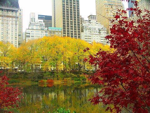 NY- Central Park, Duck Pond, Fall Colors