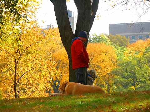 NY- Cenral Park North Meadows- Autumn Colors- Man and Dog