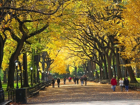NY- Central Park, Poet's Walk, Autumn 2006